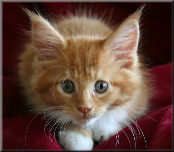 pictures of kittens and cats. youcute kitten photo,